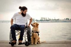 Мокрый пес, медовая борзая и пудель Чизкейк. 30 лучших снимков собак со всего мира (фото)