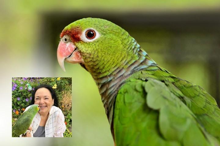 «Мой попугай спас мне жизнь». Как домашние животные помогают людям бороться с тревогой, болью или утратой