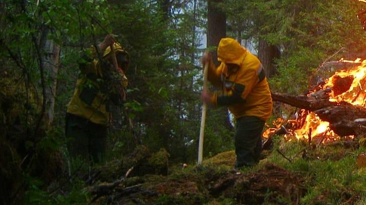 """""""Скрывают незаконные вырубки и не привлекают волонтеров"""". 6 мифов о лесных пожарах"""