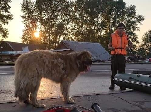 «У нас ничего больше нет, но есть собака». Как волонтеры спасали животных во время наводнения (фото, видео)