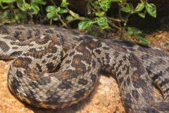В Челябинской области мужчина умер от укуса змеи из-за отсутствия противоядия