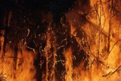 В России горят более 700 тысяч га лесов, из них тушат только 40 тысяч
