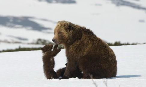 Игорь Шпиленок: «Возвращаешься через три недели, а леса уже нет». Что не дает спокойно жить фотографу дикой природы