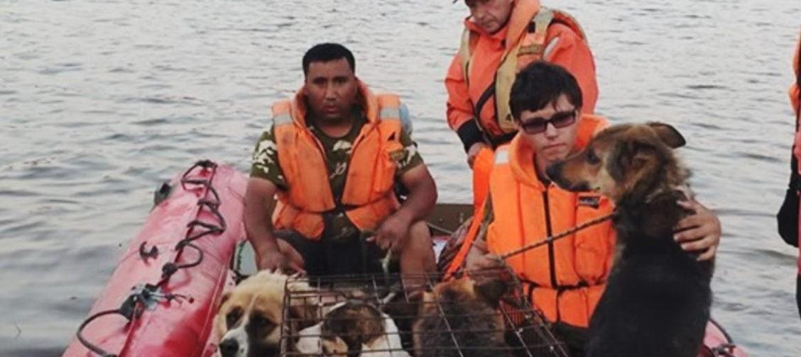 «Мы прыгали по крышам, а с чердаков торчали собачьи морды». Как спасали животных при наводнении в Тулуне