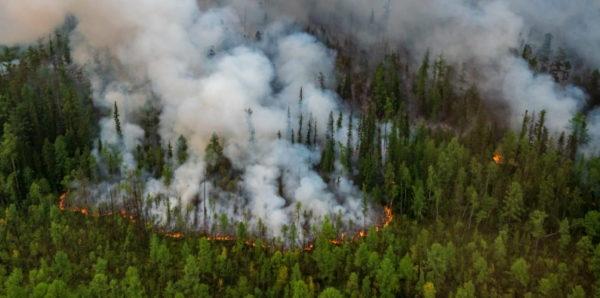 Минприроды предложило отобрать у губернаторов возможность решать, где можно не тушить пожары