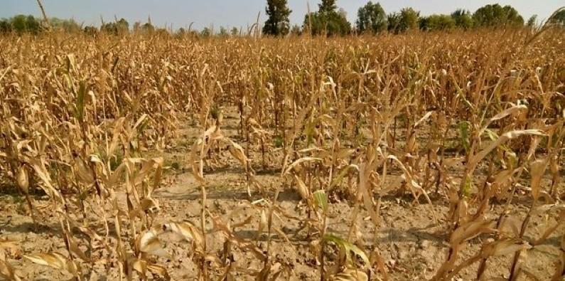В Забайкалье ввели режим ЧС из-за продолжительной засухи