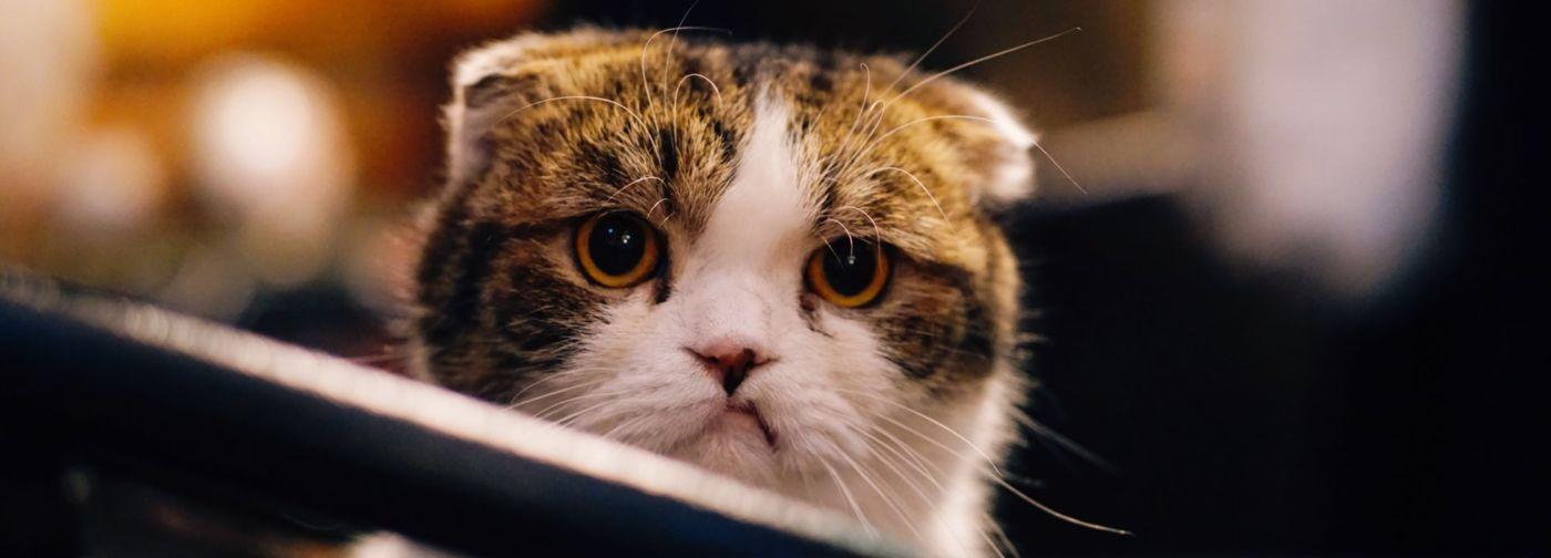 """""""Одного котенка возвращали три раза"""". Как понять, что вы готовы взять животное из приюта"""