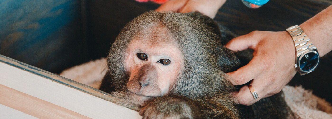 Списал цирк, умер хозяин, спасли из контактного зоопарка. Питомник, который дает животным шанс