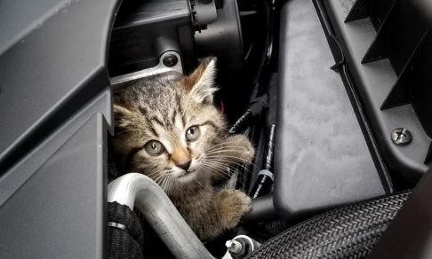 «Открывает инспектор капот, а в моторе — кошка». Зачем ее силы небесные пожалели