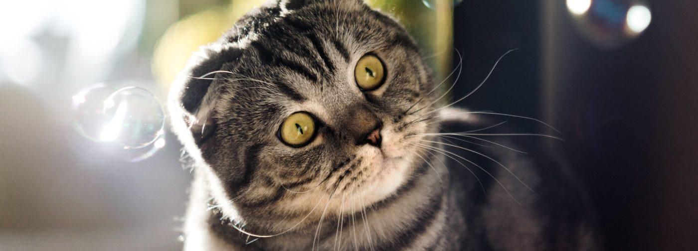 «Вот ангелы-то и играют с кошками». Какой он – кошачий рай?