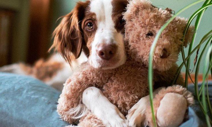 Самые милые блогеры Instagram. Мотти, Райли и другие собаки, которых вы можете найти в соцсетях