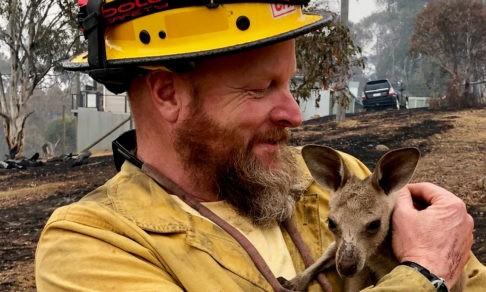 Пожары в Австралии. Как люди со всего мира спасают животных, сражаются с огнем и восстанавливают природу