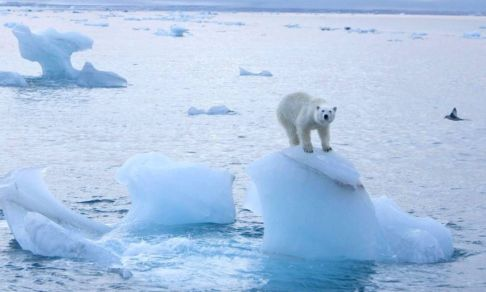 Ледники покидают вершины, им на смену приходят цветы. Угрожает ли людям стремительное изменение климата