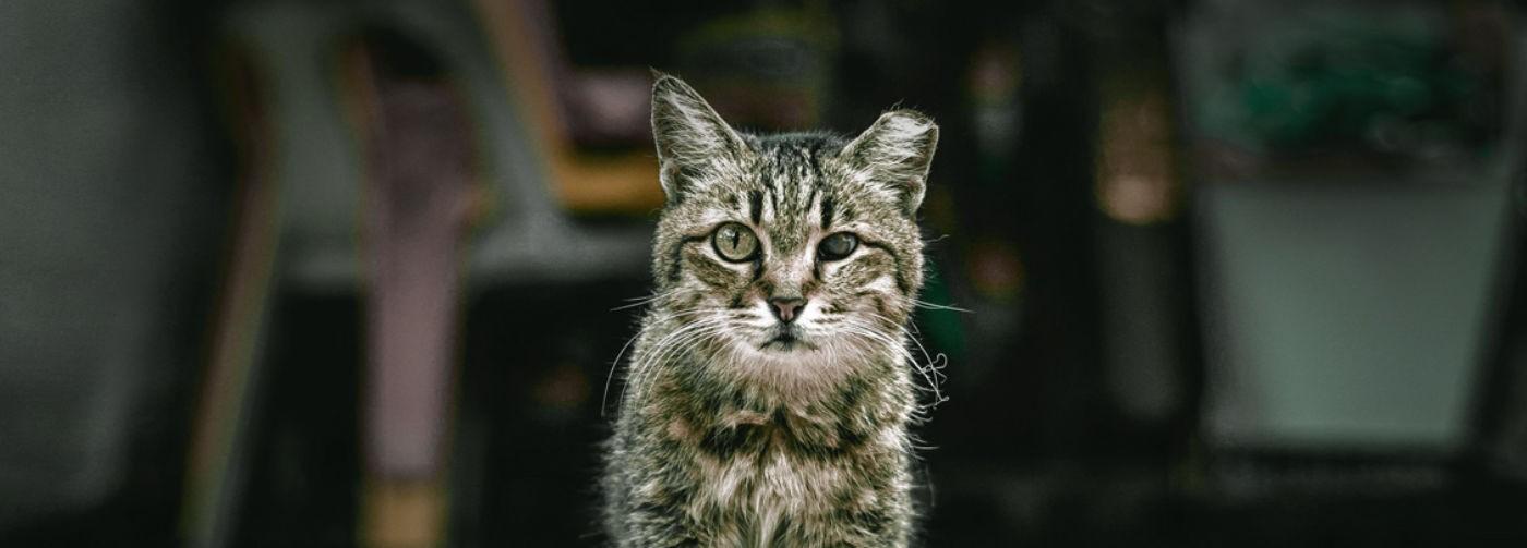 Его все гоняют, а он не умирает. Хотя кому он нужен – облезлый, страшный кот