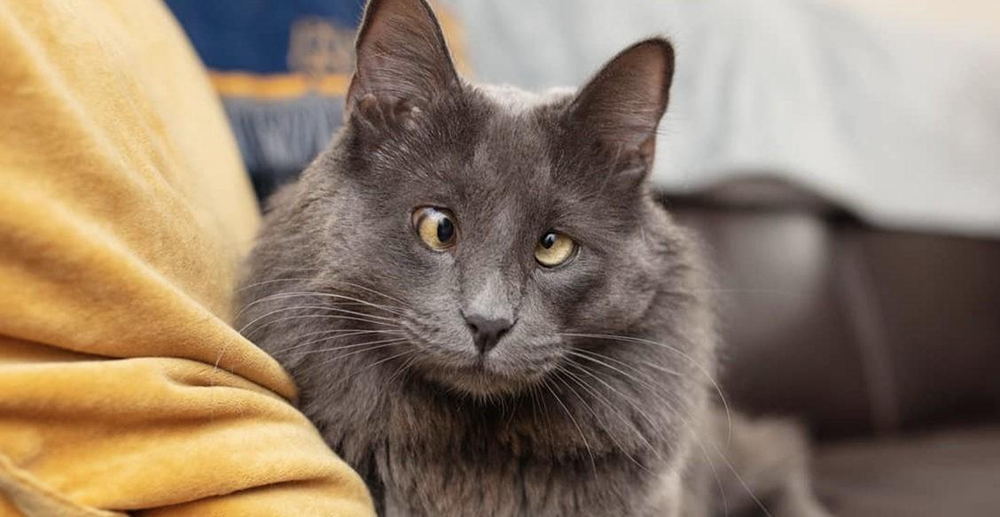 От Беларуси с любовью. Как кошка собрала деньги для бездомных животных