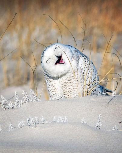 Смешные глазастые совы