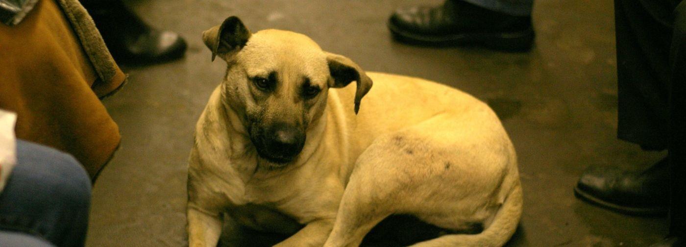 «Многие до сих пор не знают, почему у собаки — бирка». Проблема бездомных животных — как решать ее по закону