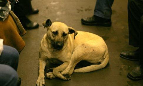 «Многие до сих пор не знают, почему у собаки - бирка». Проблема бездомных животных - как решать ее по закону
