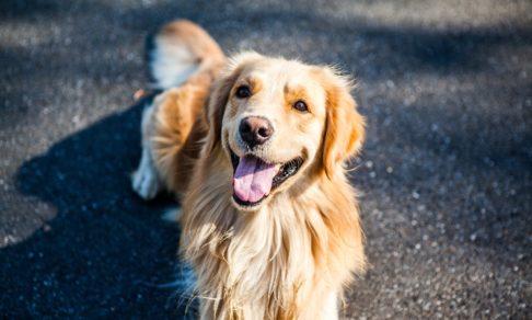 Цветы для врачей, собака-волонтер и больничные клоуны онлайн. Как люди помогают друг другу в пандемию