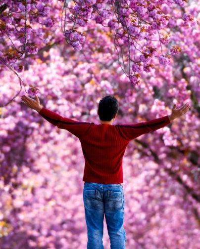 Цветущая вишня, тюльпаны и много солнца. Весенние фотографии со всего света