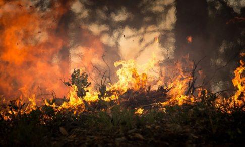 «Миллионы гектаров заполнил дым, подует ветер  — он придет в города». Григорий Куксин — о лесных пожарах в Сибири