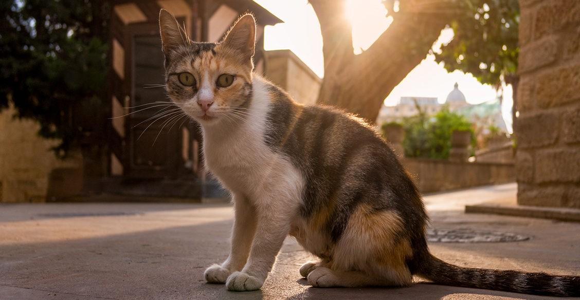Стражи старой крепости. Коты и кошки города Баку