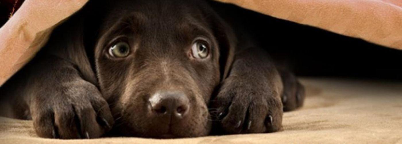 Дети писаются от страха, а собаки прячутся в ванной. Что не так с фейерверками в Новый год