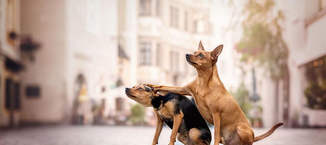 Коты и собаки тоже умеют шутить! 10 фотографий, которые вас развеселят