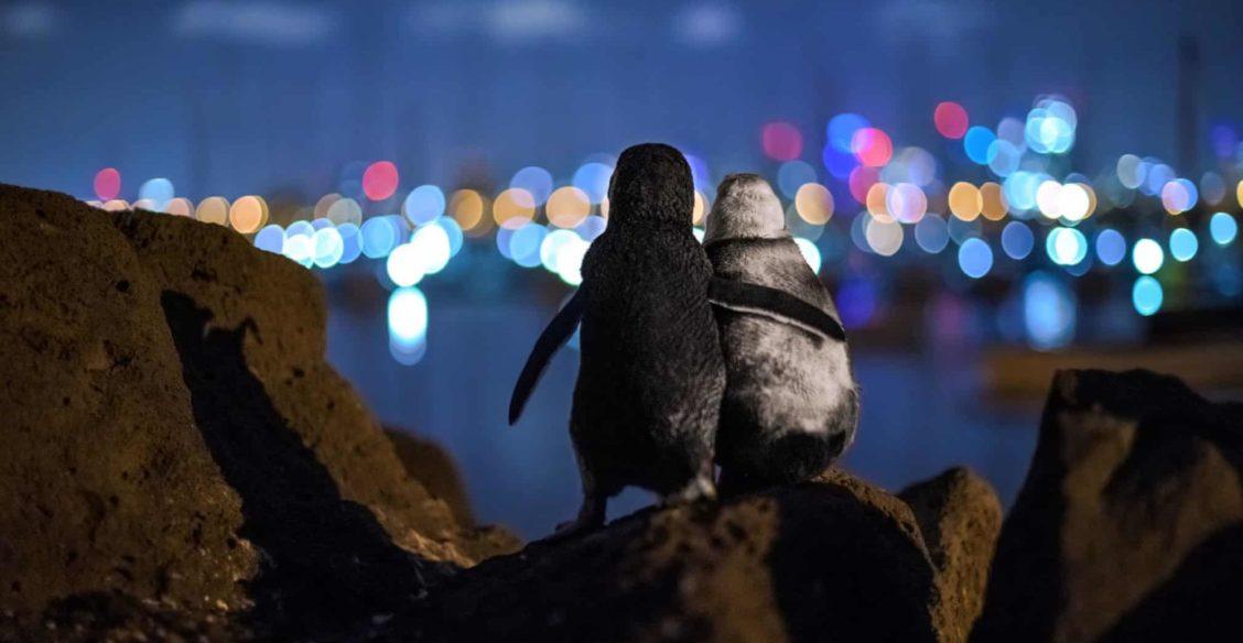 Тигриные объятия, сказочные пингвины и сон зайца. 10 лучших фото дикой природы 2020 года