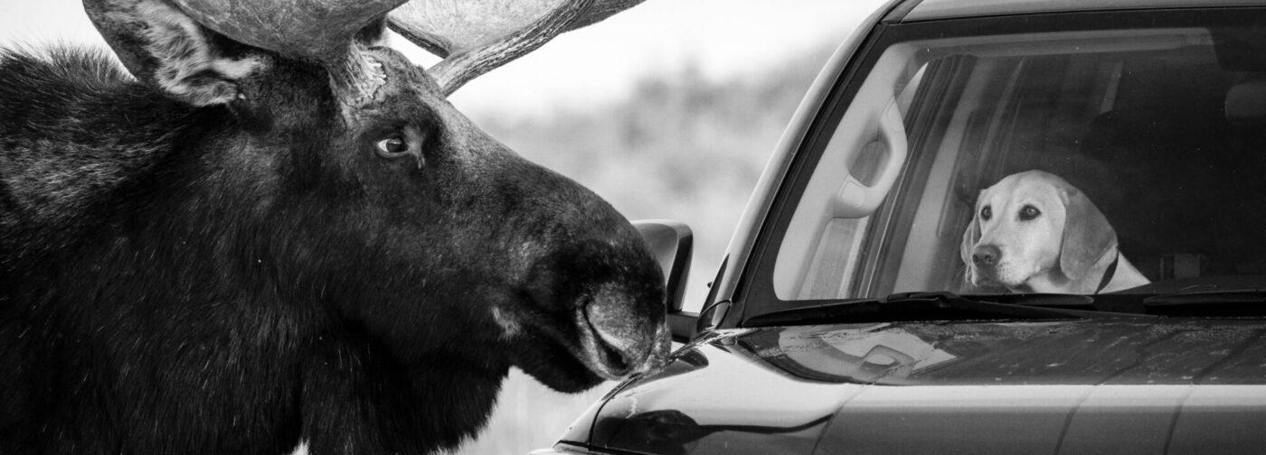 Король Лев, заботливые бобры и рыси на сеновале. 10 лучших фото дикой природы