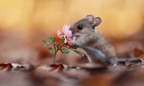 Белки, зайцы и суслик в цветах. Посмотрите, как звери встречают весну