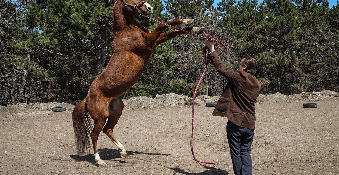 Как лошади помогают детям