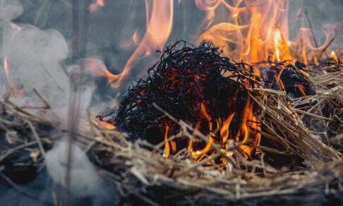 Из-за пала сухой травы горят дома всей стране. Как избежать пожара