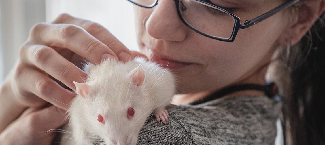 «Крысы людям жизни спасают!» Как волонтеры ищут дом животным из лабораторий