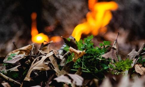 «Люди поджигают траву, а потом сгорают деревни». Григорий Куксин — о весенних пожарах в России