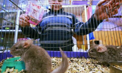 Животные в клетке