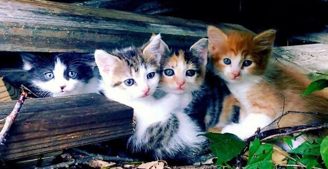 Этих котиков люди подобрали больными и несчастными. И вот какими они стали!