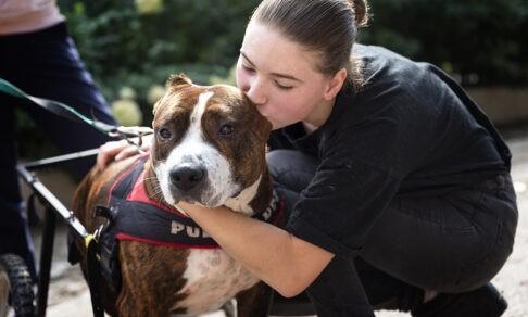 «Собака-убийца залижет до смерти». Зачем спасают бойцовых псов, с которыми не справились хозяева